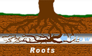 roots blocked drain
